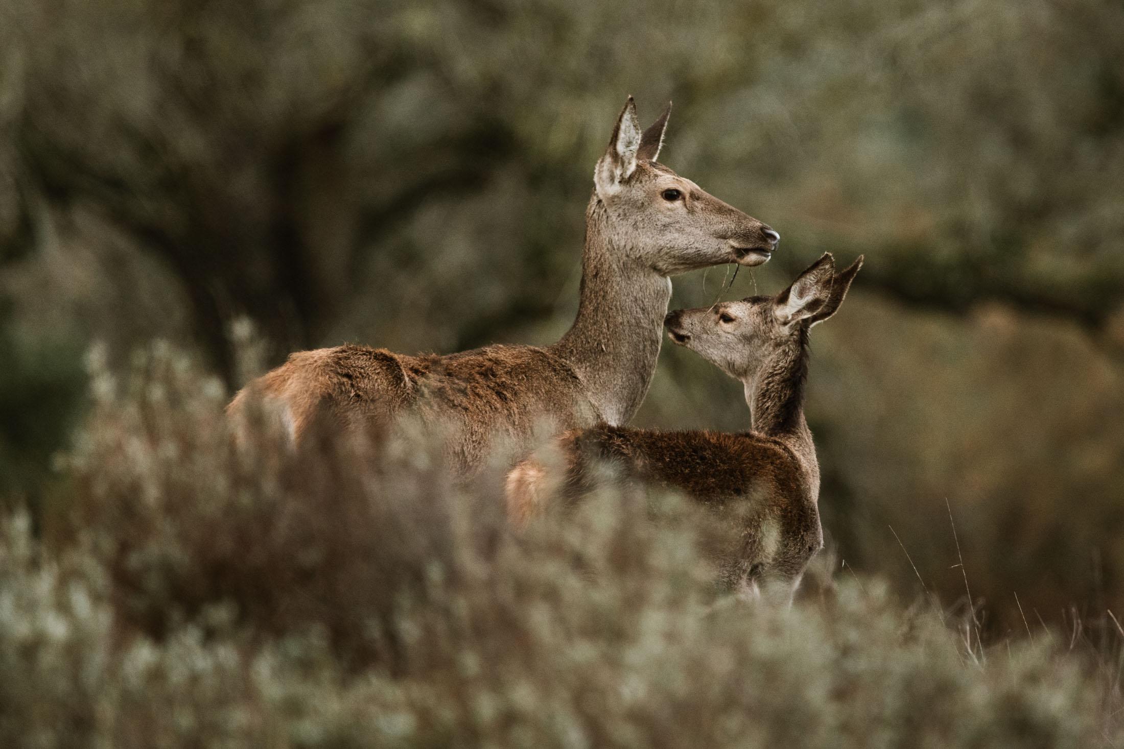 Animales en Doñana