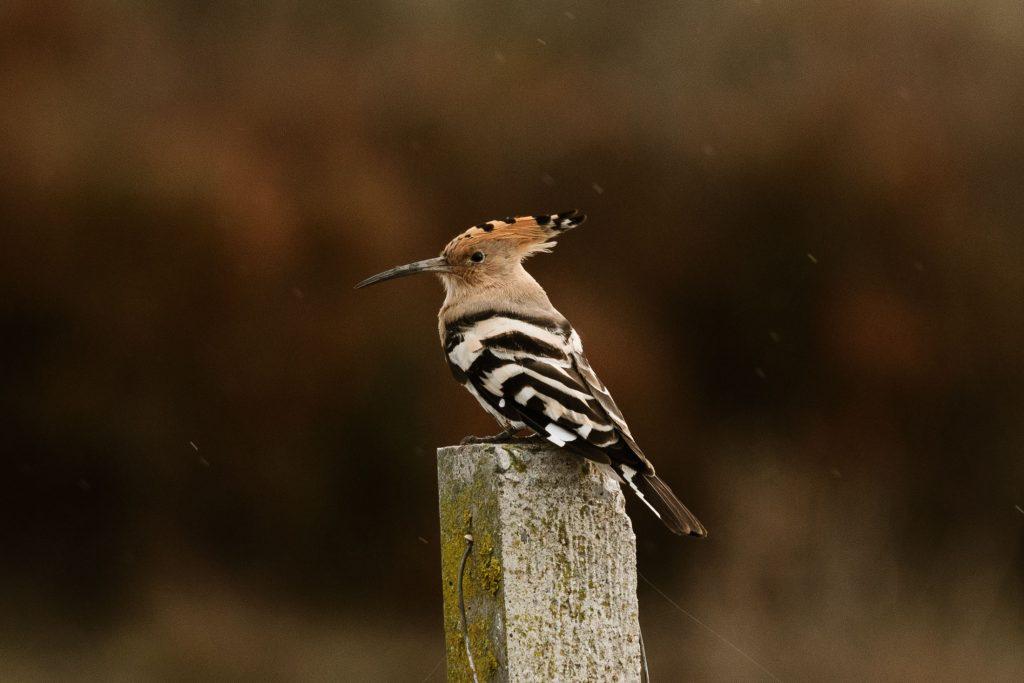 Pájaro de Doñana
