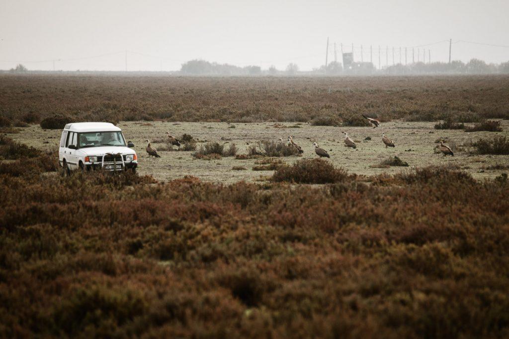 Ruta por Doñana