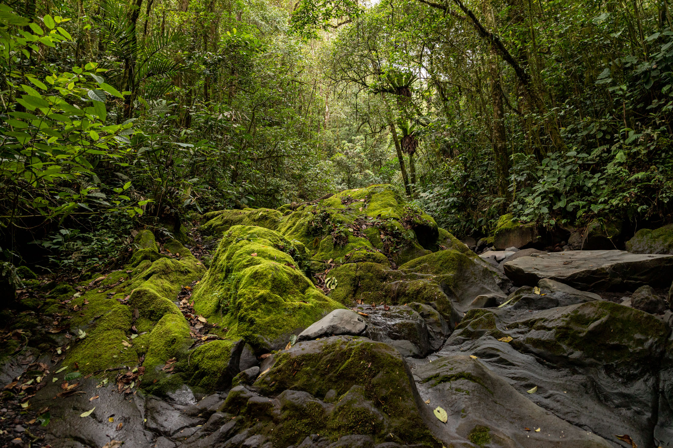 sumatra-selva-tropical