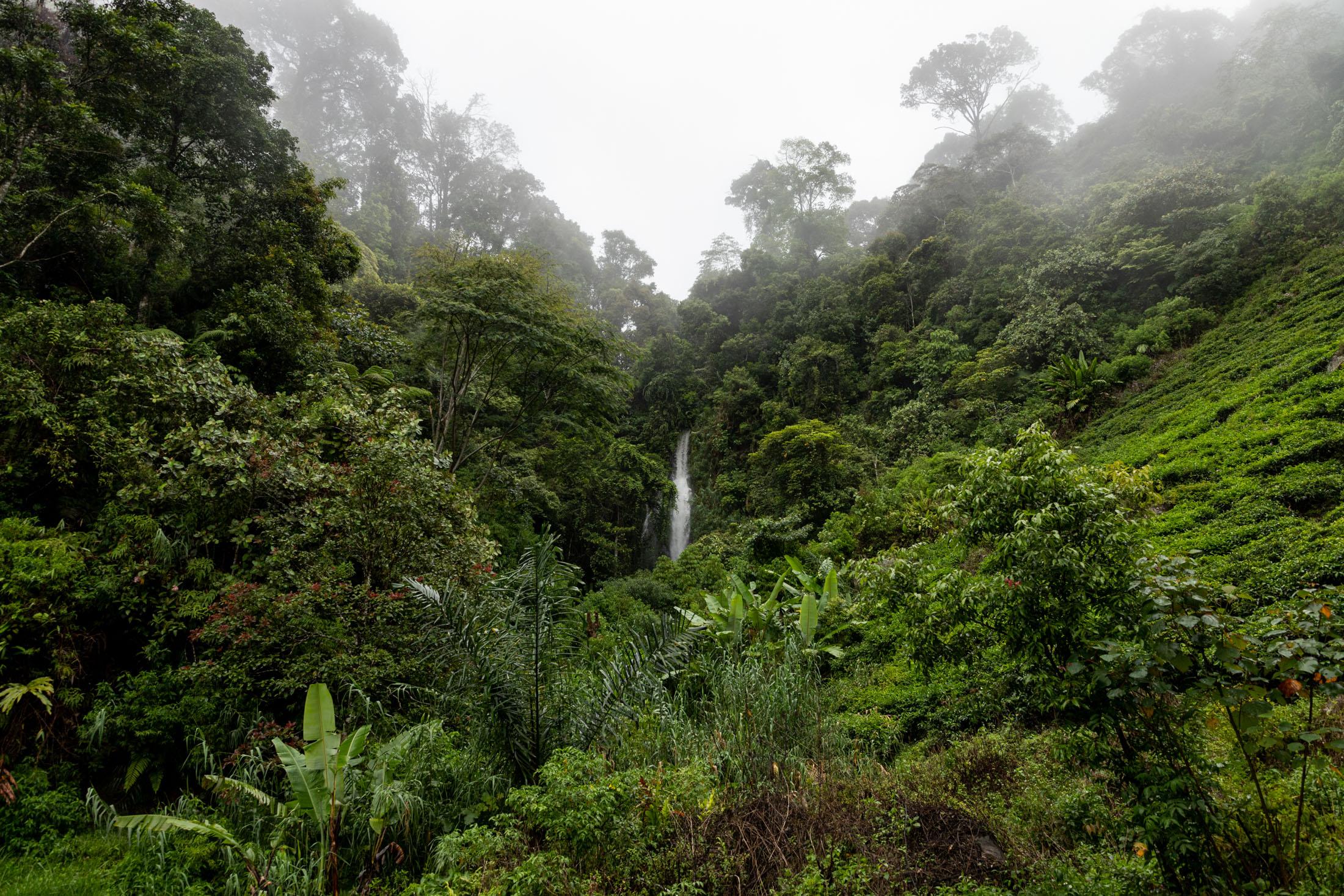 sumatra_selva-cascada