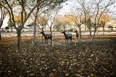 Otoño en Doñana